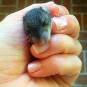 BABY RAT LOVELIGHTBLISS